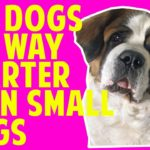 New Study: Bigger Dogs Are Better Thinkers