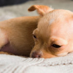 Puppy Diarrhea – Causes, Symptoms, Treatment, and Prevention – Today Every Latest World News