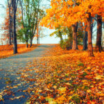Best Tarps For Fall Cleanup Projects