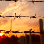 Barbed Wire supplier in North India